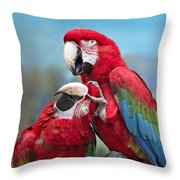 Macaw Love Throw Pillow
