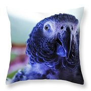 Macaw Parrot Blue Looking At You Throw Pillow