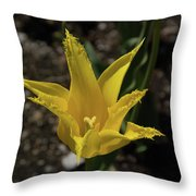 Mackinac Island Flowers 10663 Throw Pillow