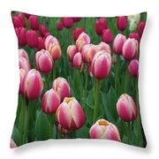 Mackinac Island Tulips 10681 Throw Pillow