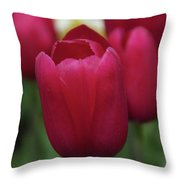 Macknac Island Tulips 10393 Throw Pillow