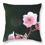 Macro Cherry Blossoms Throw Pillow
