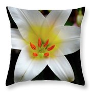 Macro Close Up Of White Lily Flower In Full Blossom Throw Pillow