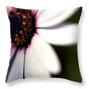 Macro Daisy One Throw Pillow