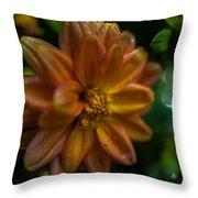 Macro Of Dahlia Flower Throw Pillow