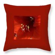Macro Of Red Amaryllis Flower Throw Pillow