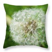 macro shot of a beautiful Dandelion. Throw Pillow