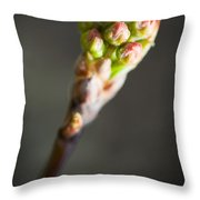 Macro Young Crabapple Tree Blossom Throw Pillow