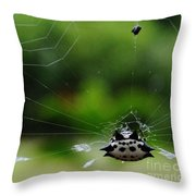 Spiny Orb Weaver Throw Pillow