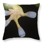 Madagascar Day Gecko Phelsuma Throw Pillow