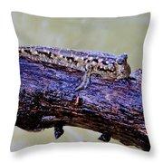 Madagascar Mudskipper Throw Pillow