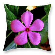 Madagascar Periwinkle Throw Pillow