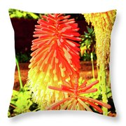 Madeira Funchal  Tritoma, Red Hot Poker, Torch Lily, Poker Plant Throw Pillow