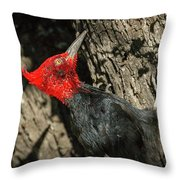 Magellanic Woodpecker - Patagonia Throw Pillow
