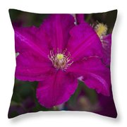 Magenta Clematis Throw Pillow