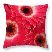Magenta Gerber Daisies Throw Pillow