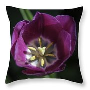 Magenta Tulip Center Squared Throw Pillow