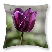 Magenta Tulip Squared Throw Pillow