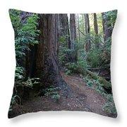 Magical Path Through The Redwoods On Mount Tamalpais Throw Pillow