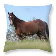 Magnificent Horse Throw Pillow