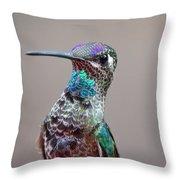 Magnificent Hummingbird Male Throw Pillow