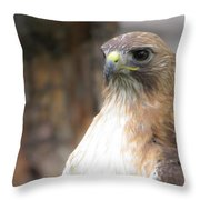 Magnificent Red-tailed Hawk  Throw Pillow