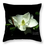 Magnificent White Magnolia - Photography Throw Pillow