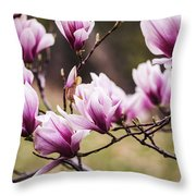 Magnolia Blooming In An Early Spring Throw Pillow
