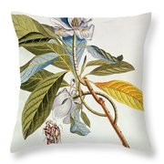 Magnolia Glauca Throw Pillow
