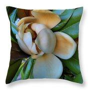 Magnolia In Oxford Throw Pillow
