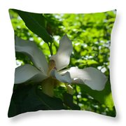 Magnolia Macrophylla  Throw Pillow