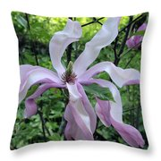 Magnolia Soulangeana Throw Pillow
