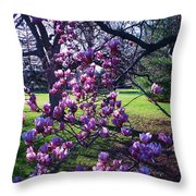 Magnolia Tree Gettysburg Pa Throw Pillow