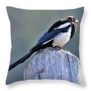 Magpie In The Sun Throw Pillow