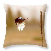 Magpie Wings Of Light Throw Pillow