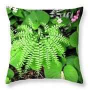 Maidenhair Fern, Adiantum Pedatum And Friends Throw Pillow