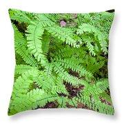Maidenhair Ferns In Columbia River Gorge Closeup Throw Pillow
