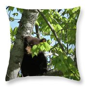Maine Black Bear Cub In Tree Throw Pillow