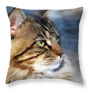 Maine Coon II Throw Pillow