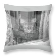 Maine Coon In Window Throw Pillow