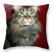 Maine Coon Portrait Throw Pillow