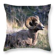 Majestic Bighorn Sheep Throw Pillow