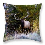Majestic Bull Elk Survivor In Colorado  Throw Pillow