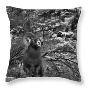 Majestic In Jasper Black And White Throw Pillow