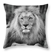 Majestic Male Lion Black And White Photo Throw Pillow