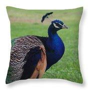 Majestic Peacock Throw Pillow