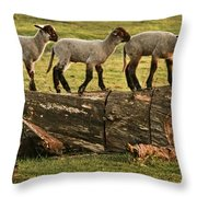 Makeway For Lambs Throw Pillow