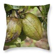 Malabar Chestnuts Throw Pillow