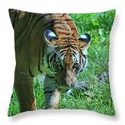 Malayan Tiger # 2 Throw Pillow