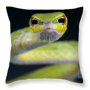 Malayan Vine Snake Throw Pillow